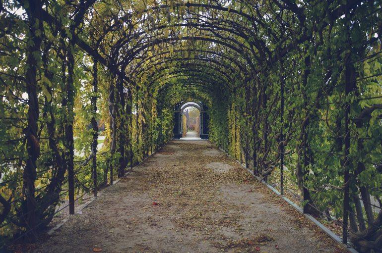 bindweed-corridor-garden-59599